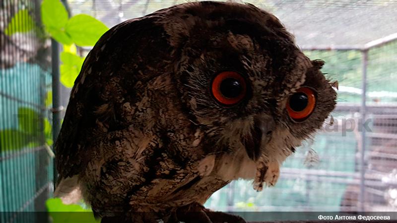 Приморье 2016 (часть 3) - Дневник наблюдений птицДневник ...   449x800